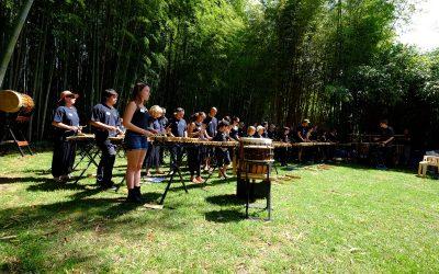 Les pousses du Bamboo – Mercredi 21 juin